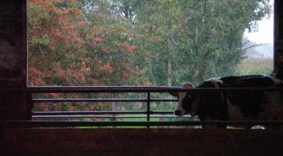 Uitzicht vanuit de koeienstal