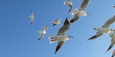 milieuvriendelijk vliegen