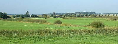 Natuurgebied de Gement.
