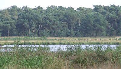 Door drinkwaterwinning verdroogt 'De Groote Meer' in Grenspark Zoom.
